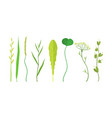 green leaves set organic plant elements vector image