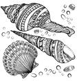 Set of decorative seashells isolated on white fond vector image vector image