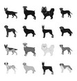 dog breeds blackmonochrome icons in set vector image