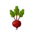 fresh juicy veg - beet beetroot icon vector image vector image
