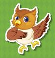 Owlet vector image