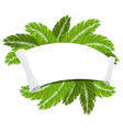 Palm branches and paper scroll vector image