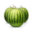realistic watermelon fruit 3d vector image