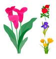 beautiful flower bouquet design decoration vector image vector image