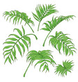Green palm fronds sketch