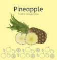 pineapple image vector image vector image