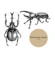 rhinoceros beetle hand drawing vintage engraving vector image