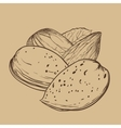 Almond isolated on brown background vector image vector image