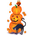 halloween pumpkin with black cat and owl vector image