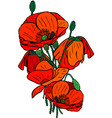 hand-drawn bouquet of blooming red poppies with vector image vector image