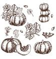 hand drawn set sketch pumpkin leaves