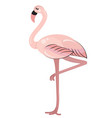 pink flamingo standing on one leg vector image