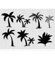 set tropical palm trees with leaves mature vector image vector image
