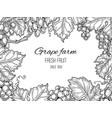 grape frame vineyard vintage background vector image