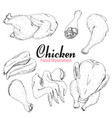Set of hand drawn chicken isolated on white vector image