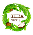 Shea nuts with leaves in