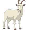 Adult funny goat vector image