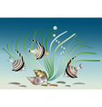 Aquarium fish with shells and plant vector image