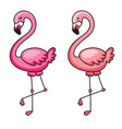 flamingo vector image vector image