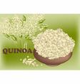 quinoa vector image vector image