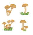 set edible mushrooms growing on a vector image vector image