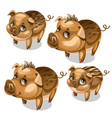 set of cute pigs with brown eyes isolated vector image vector image