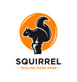 squirrel and circle logo design template vector image vector image