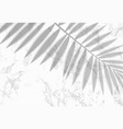 transparent shadow overlay effect tropic leaf vector image vector image