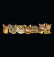 long with cats vector image vector image
