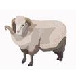 Ram sheep isolated vector image
