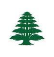 cedar tree icon vector image vector image