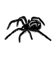 cross spider Araneus vector image vector image