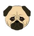 cute face dog pug pet aminal image vector image vector image