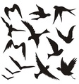 set of flying birds vector image vector image