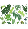 set tropical leaves vector image vector image