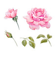watercolor roses set vector image vector image