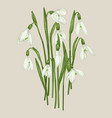 bouquet snowdrops vector image