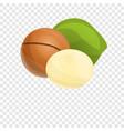 macadamia icon cartoon style vector image