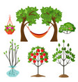 set of summer plants in gardening concept apple vector image vector image