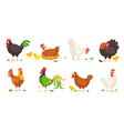 cartoon domestic chicken funny roosters and vector image