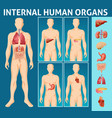 cartoon human body internal parts concept vector image vector image