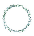 eucalyptus tropical plant in form circle vector image vector image