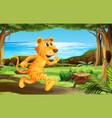 tiger running at park vector image vector image