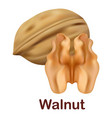 walnut icon realistic style vector image vector image