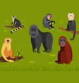 monkey character animal different breads wild zoo vector image vector image