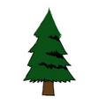 pine tree foliage trunk forest vegetation icon vector image