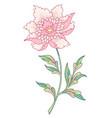stylized peony flower vector image vector image