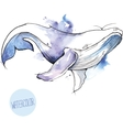 watercolor whale vector image vector image