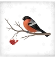 Winter Bird Bullfinch Tree Branches vector image vector image