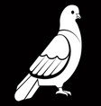 pigeon or dove white bird vector image